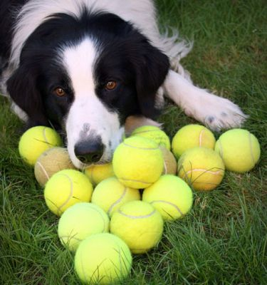 dogs_with_tennis_balls_10