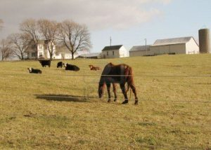 usda not for commercial farms