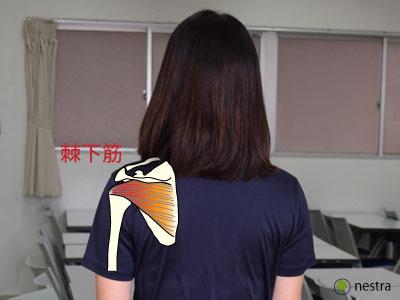 肩インピンジメント症候群棘下筋