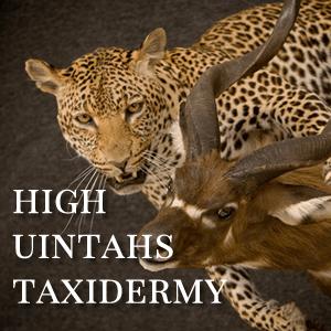 High Uintahs Taxidermy