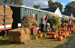 Pumkins at Rochester Cider Mill.
