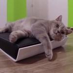 猫を虜にするヨーロッパモダンな猫ベッド、INDIEGOGOで支援を募集中