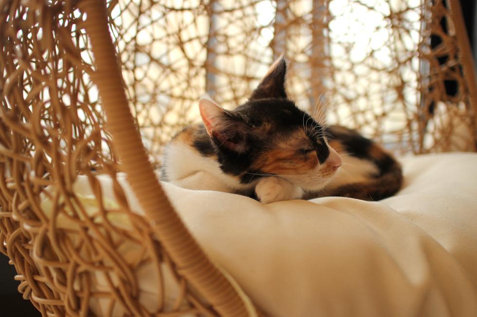 大分市猫カフェmaison de chat(メゾンデシャ)で元気一杯おもてなし