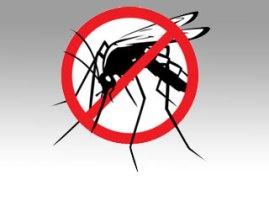 main_mosquito
