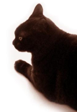 黒猫の横顔の写真素材
