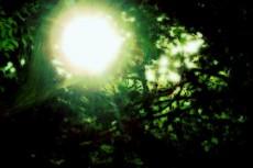 木漏れ日の写真素材