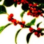 赤い実の写真素材