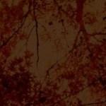 紅葉の写真素材
