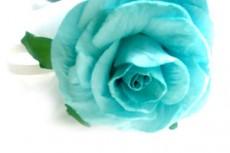 鮮やかな青緑色の薔薇