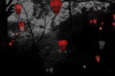 色のない森に灯る赤い提灯