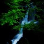 森を流れる小さい滝