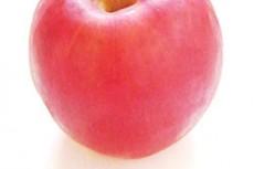 リンゴの写真素材