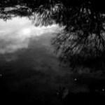 水に映る森の写真素材