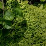 緑の苔と葉(2パターン)