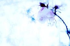 flower377
