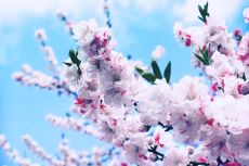 flower379