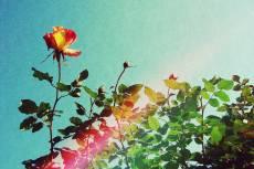 flower382