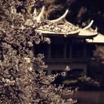 【高解像度】古写真風の桜と旧御涼亭(台湾閣)(2パターン)