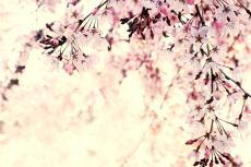 flower430-2