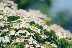 flower460