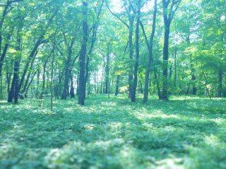 【高解像度】森林浴