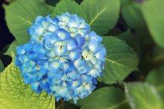 flower508