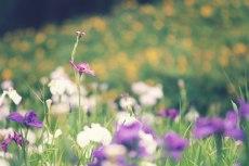 flower516