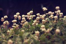 flower517-2