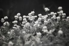 flower517-3