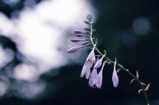 flower526