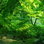 【高解像度】万緑の森林(3パターン)