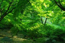 scenery382