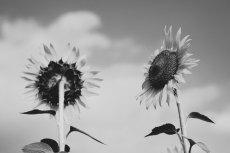 flower573-3