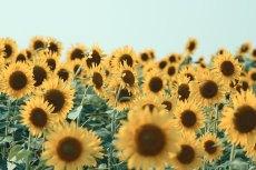 flower576