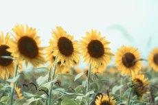 flower577