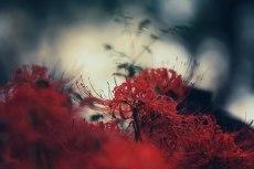 flower606-2