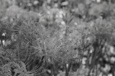 flower610-3