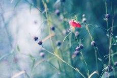 flower616