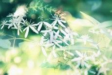 flower625
