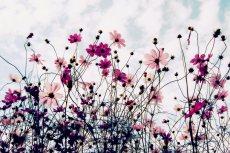 flower651