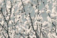 flower663-3