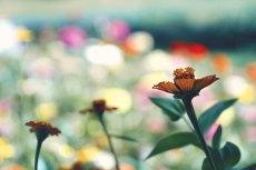 flower671