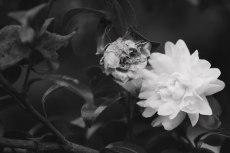 flower674-3