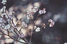 flower680-2