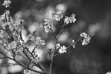 flower680-3