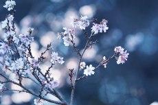 flower680