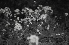 flower686-3