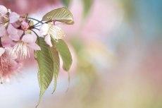 flower690