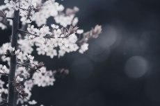 flower706-3