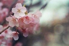 flower709-2